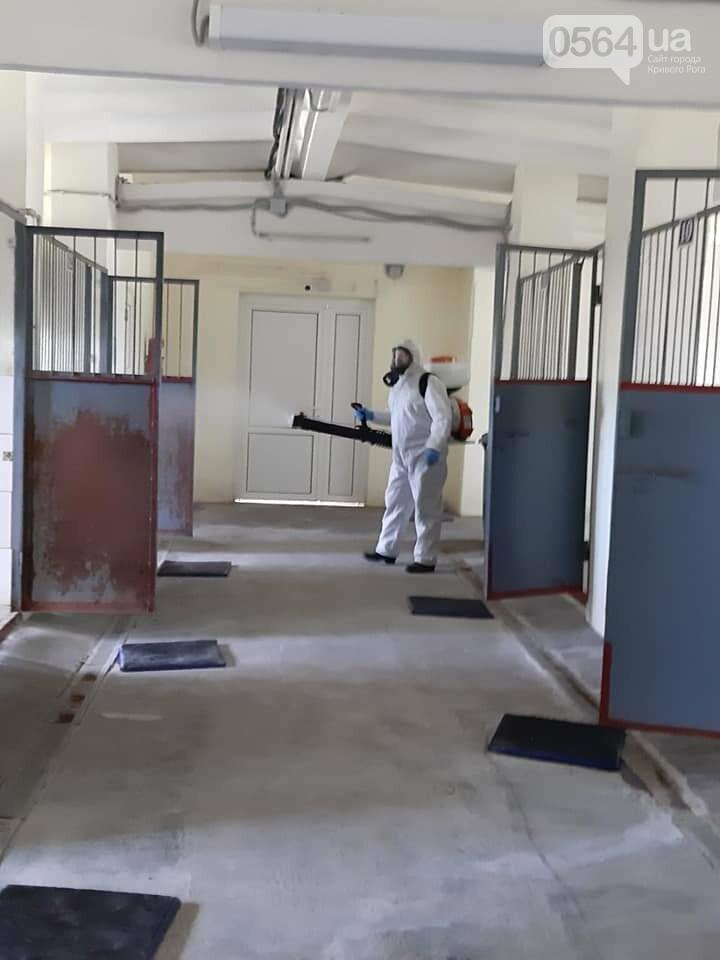 На криворожском КП провели дезинфекцию и установли боксы для борьбы с крысами, - ФОТО , фото-3