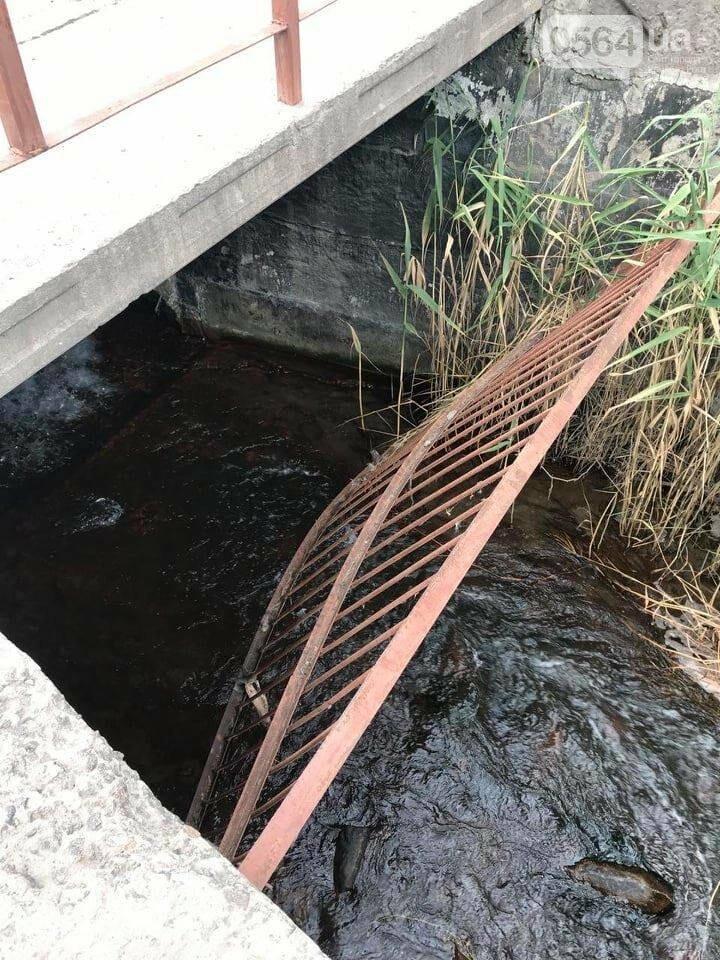 В Кривом Роге выясняют причины гибели рыбы в пруду в центре города, - ФОТО , фото-9