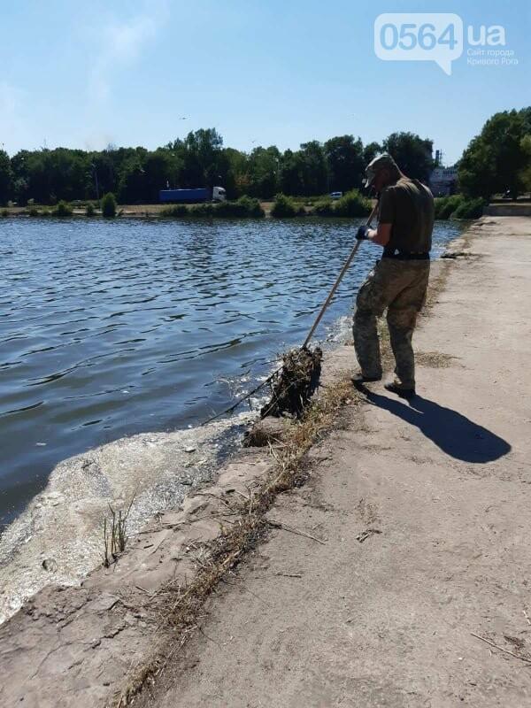 В Кривом Роге убрали водное зеркало пруда, где обнаружили гибель рыбы, - ФОТО , фото-3