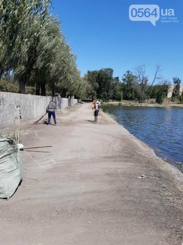 В Кривом Роге убрали водное зеркало пруда, где обнаружили гибель рыбы, - ФОТО , фото-1