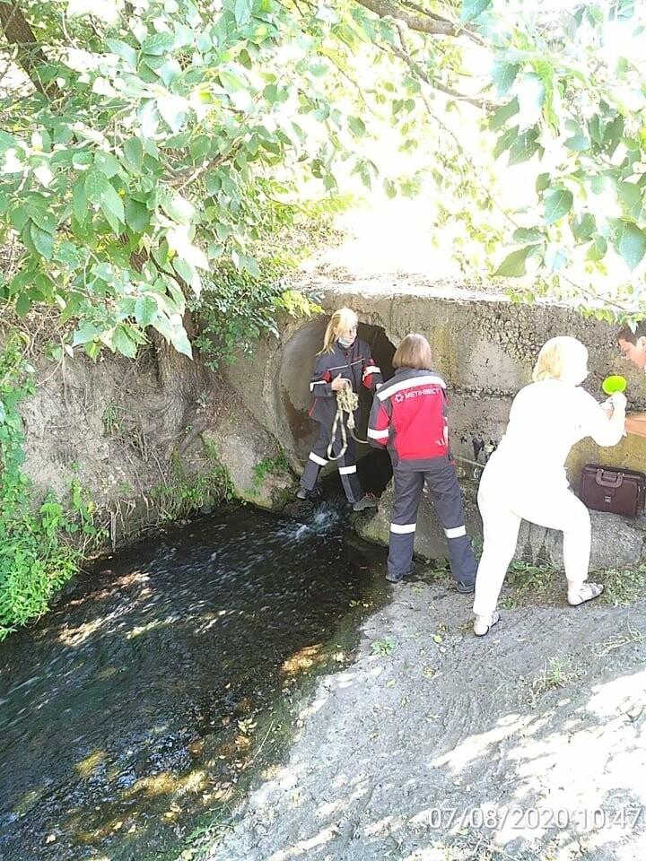 Криворожские экологи рассказали о результатах мониторингового исследования воды в Саксагани, - ФОТО , фото-1