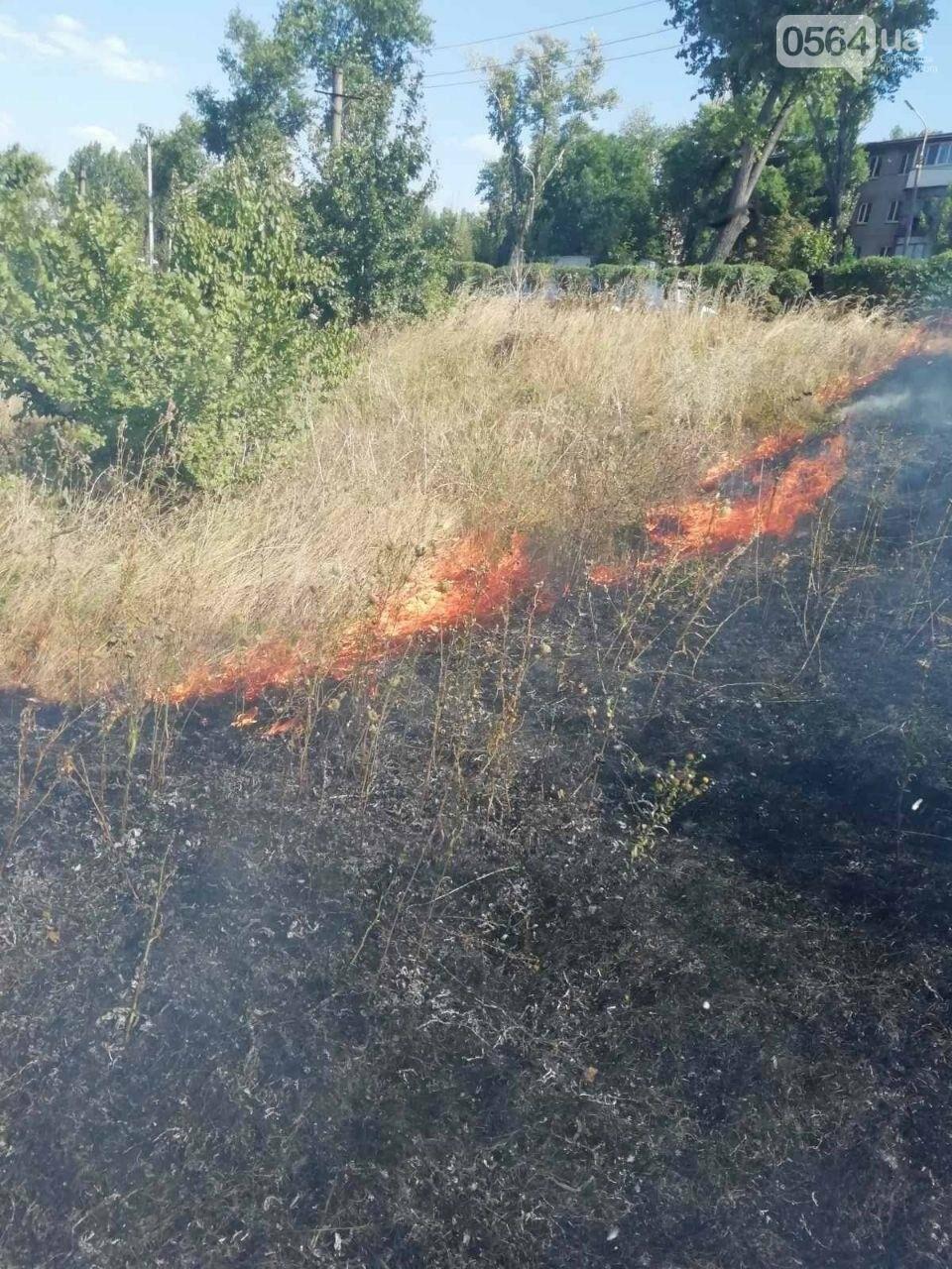 За прошедшие сутки в Кривом Роге произошло 5 пожаров в эко-системе, - ФОТО , фото-8