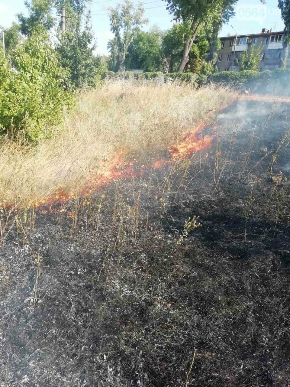 За прошедшие сутки в Кривом Роге произошло 5 пожаров в эко-системе, - ФОТО , фото-6