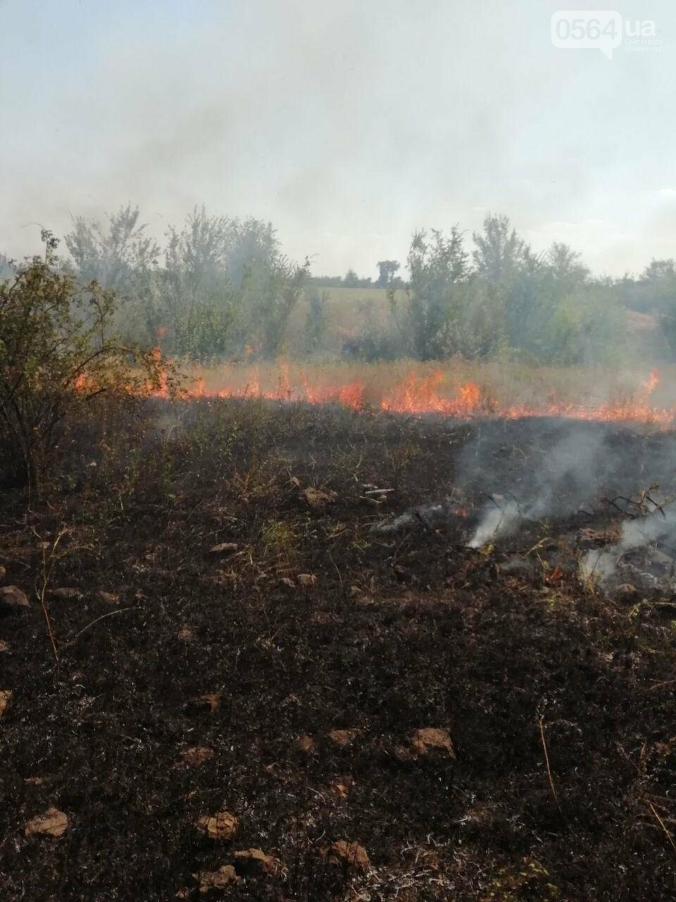 За прошедшие сутки в Кривом Роге произошло 5 пожаров в эко-системе, - ФОТО , фото-1