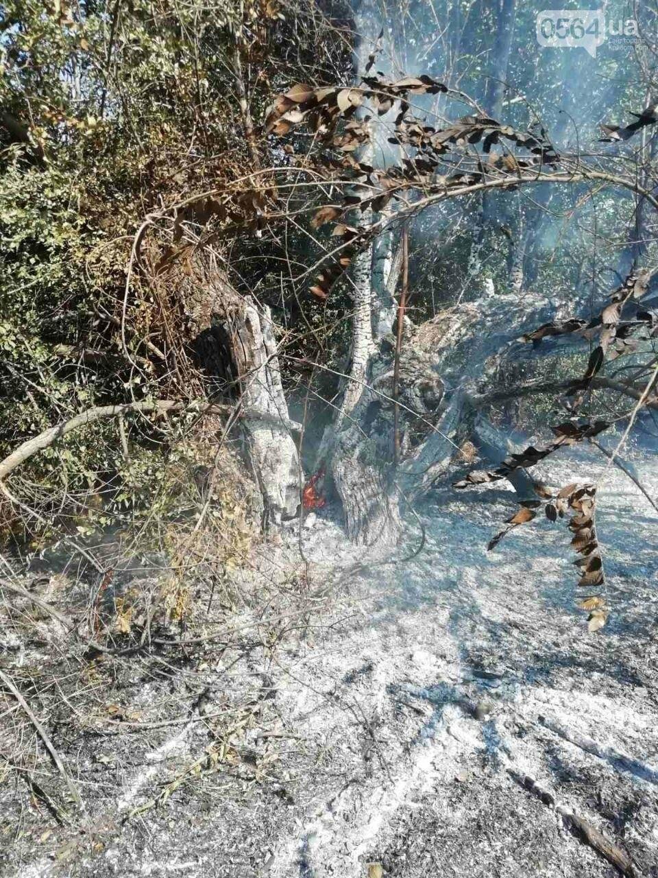 За прошедшие сутки в Кривом Роге произошло 5 пожаров в эко-системе, - ФОТО , фото-4