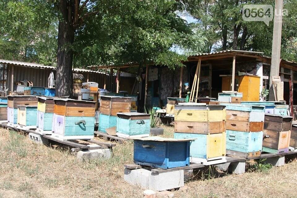 Пчеловодов Криворожья поздравили с Яблочным Спасом и Днем пасечника, - ФОТО , фото-3