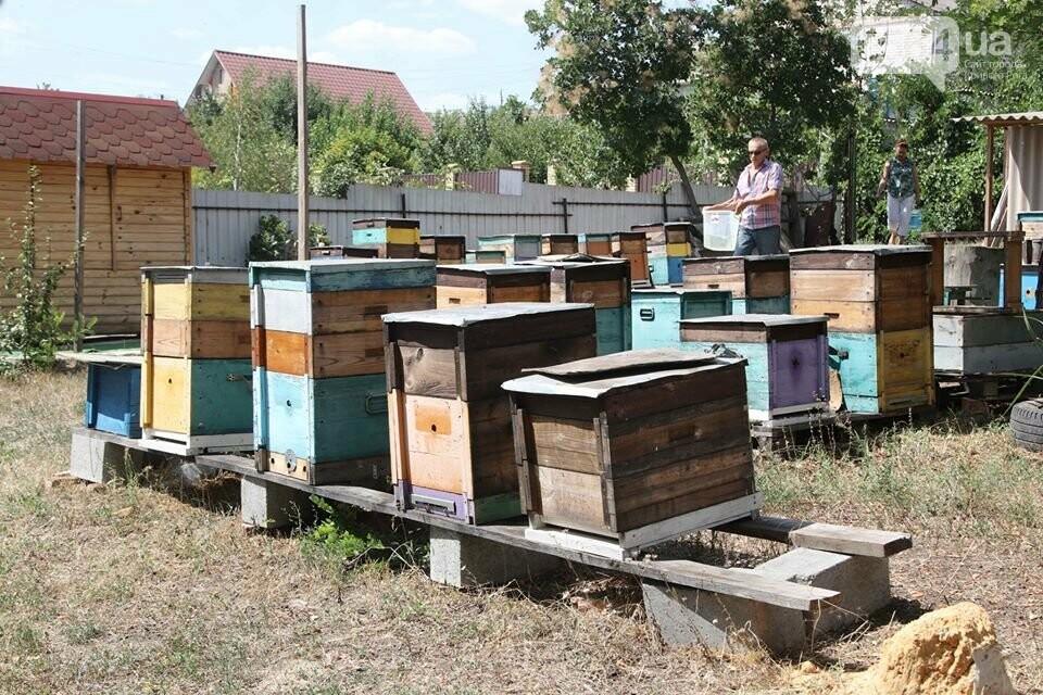 Пчеловодов Криворожья поздравили с Яблочным Спасом и Днем пасечника, - ФОТО , фото-2