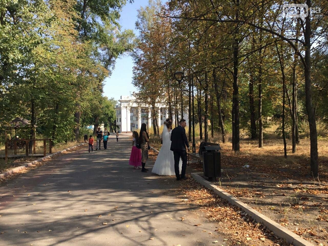 """""""Политика и бесхозяйственность"""", - криворожане поделились мнениями о Гданцевском парке, - ФОТО, ВИДЕО, фото-1"""