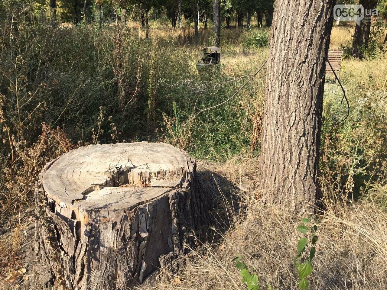"""""""Политика и бесхозяйственность"""", - криворожане поделились мнениями о Гданцевском парке, - ФОТО, ВИДЕО, фото-100"""