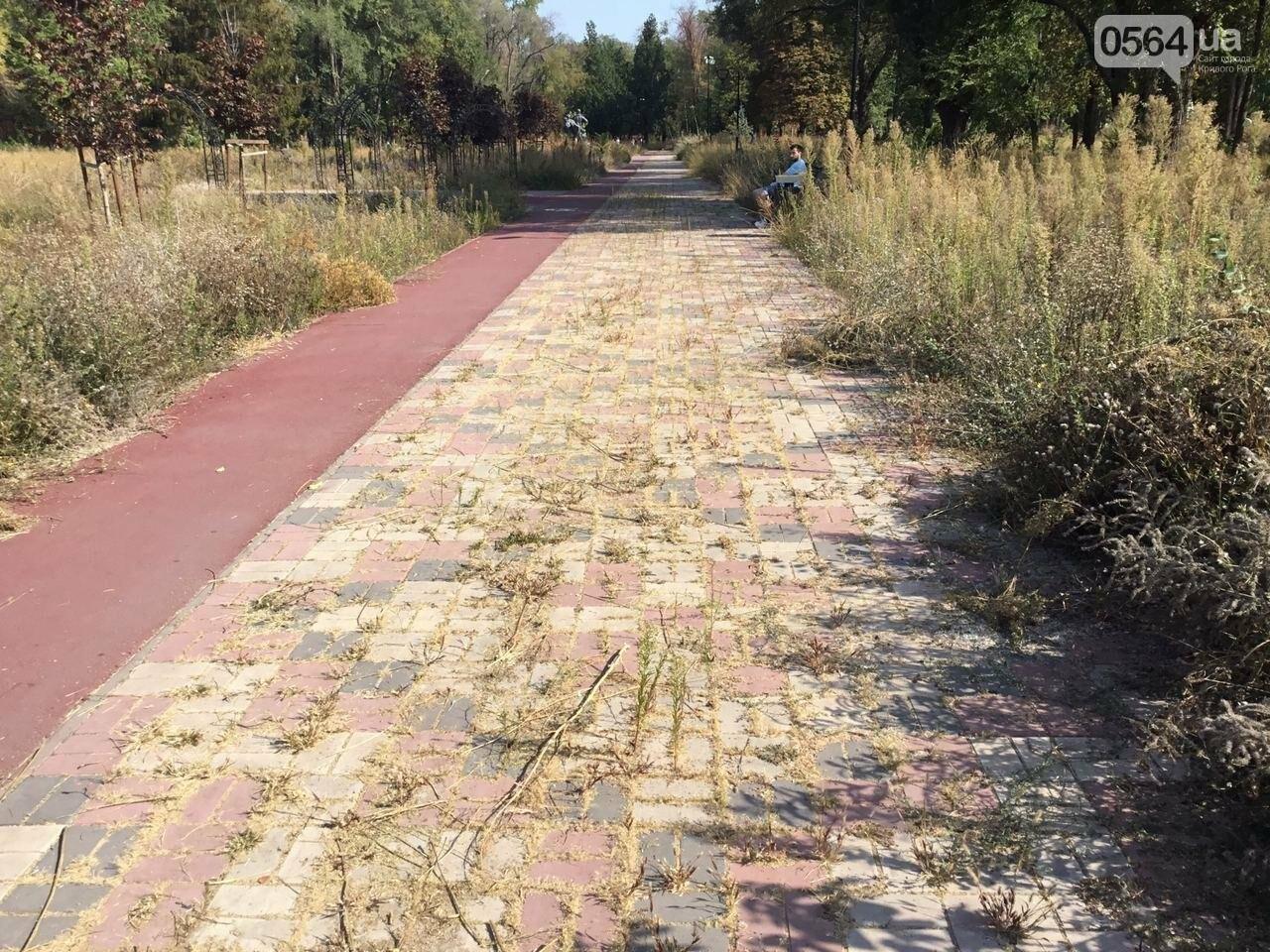 """""""Политика и бесхозяйственность"""", - криворожане поделились мнениями о Гданцевском парке, - ФОТО, ВИДЕО, фото-85"""