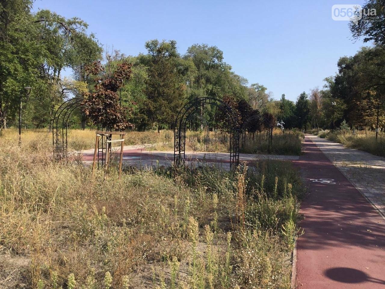 """""""Политика и бесхозяйственность"""", - криворожане поделились мнениями о Гданцевском парке, - ФОТО, ВИДЕО, фото-86"""