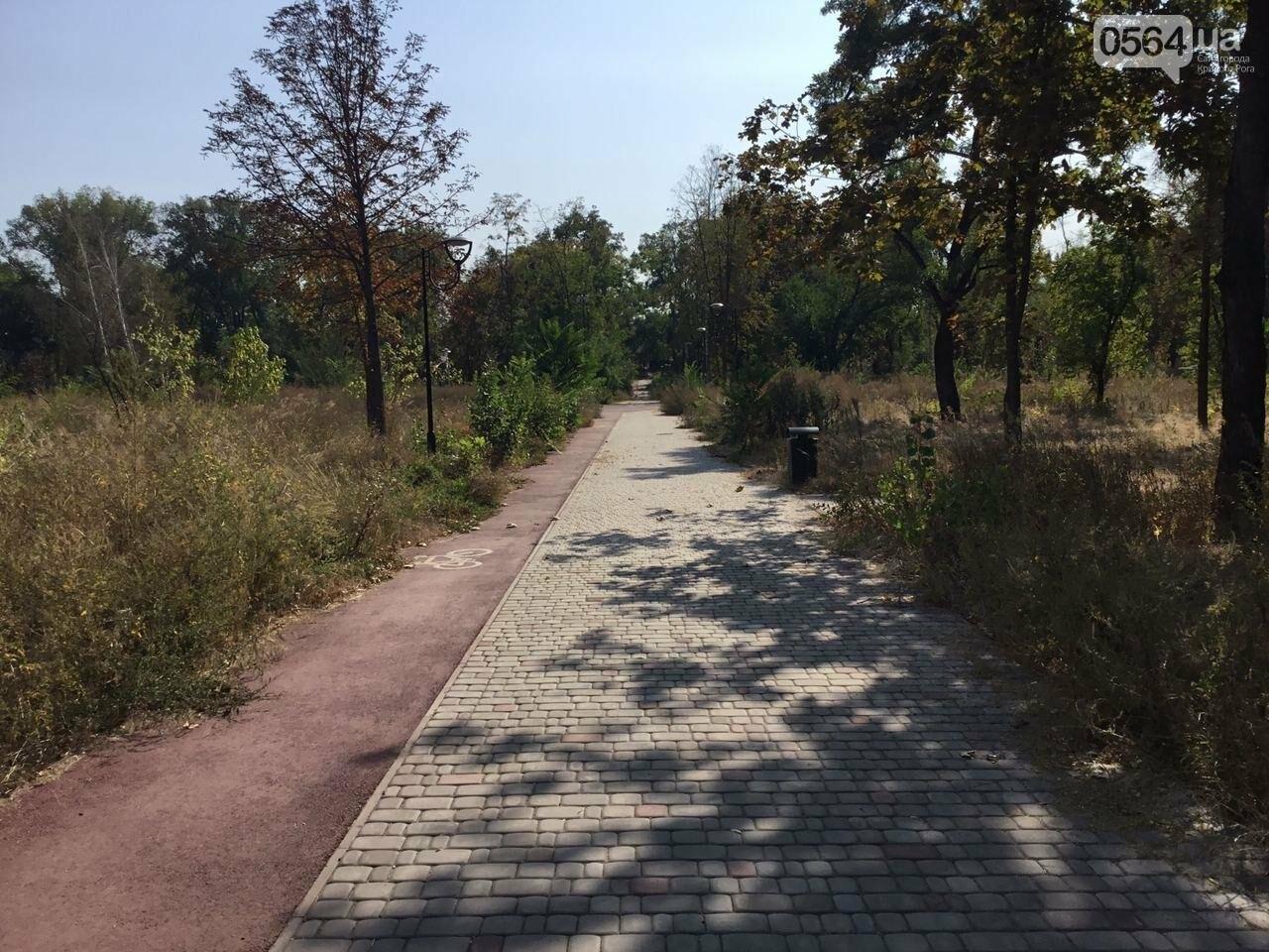 """""""Политика и бесхозяйственность"""", - криворожане поделились мнениями о Гданцевском парке, - ФОТО, ВИДЕО, фото-69"""