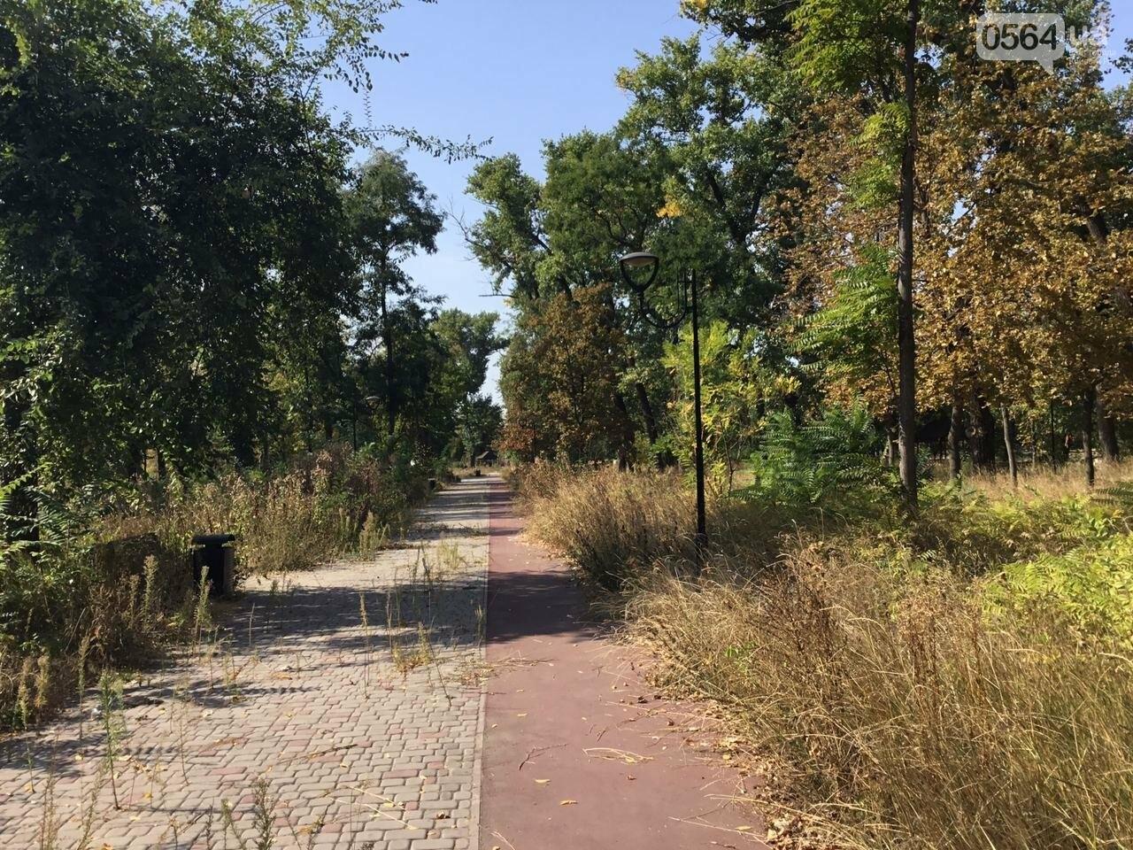 """""""Политика и бесхозяйственность"""", - криворожане поделились мнениями о Гданцевском парке, - ФОТО, ВИДЕО, фото-67"""