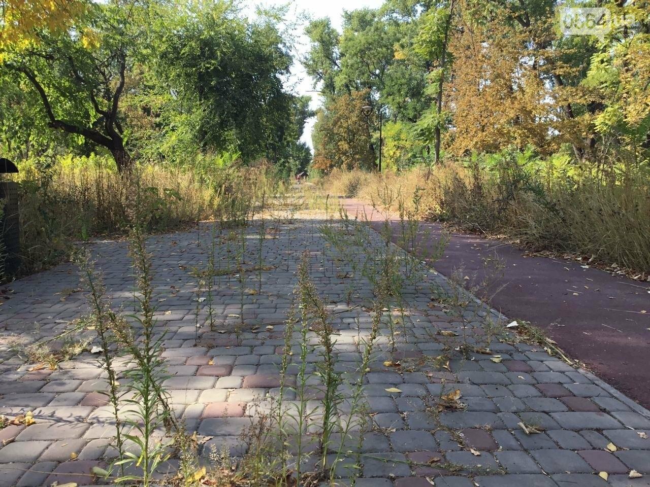 """""""Политика и бесхозяйственность"""", - криворожане поделились мнениями о Гданцевском парке, - ФОТО, ВИДЕО, фото-66"""