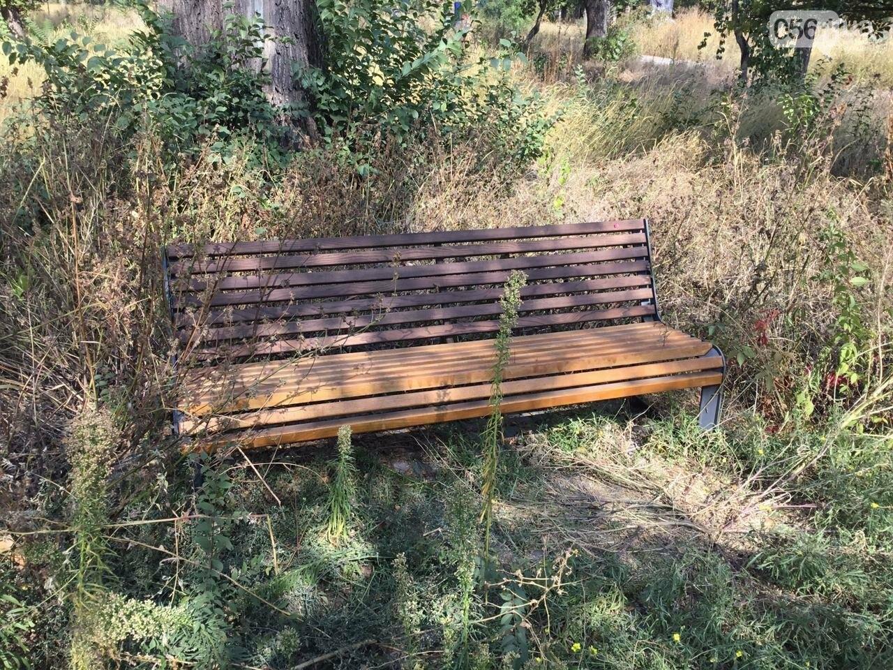 """""""Политика и бесхозяйственность"""", - криворожане поделились мнениями о Гданцевском парке, - ФОТО, ВИДЕО, фото-54"""