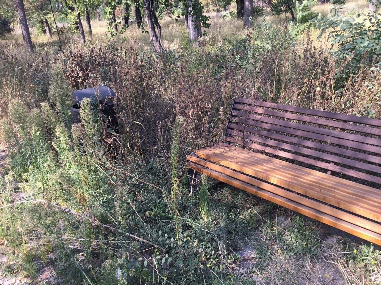 """""""Политика и бесхозяйственность"""", - криворожане поделились мнениями о Гданцевском парке, - ФОТО, ВИДЕО, фото-53"""