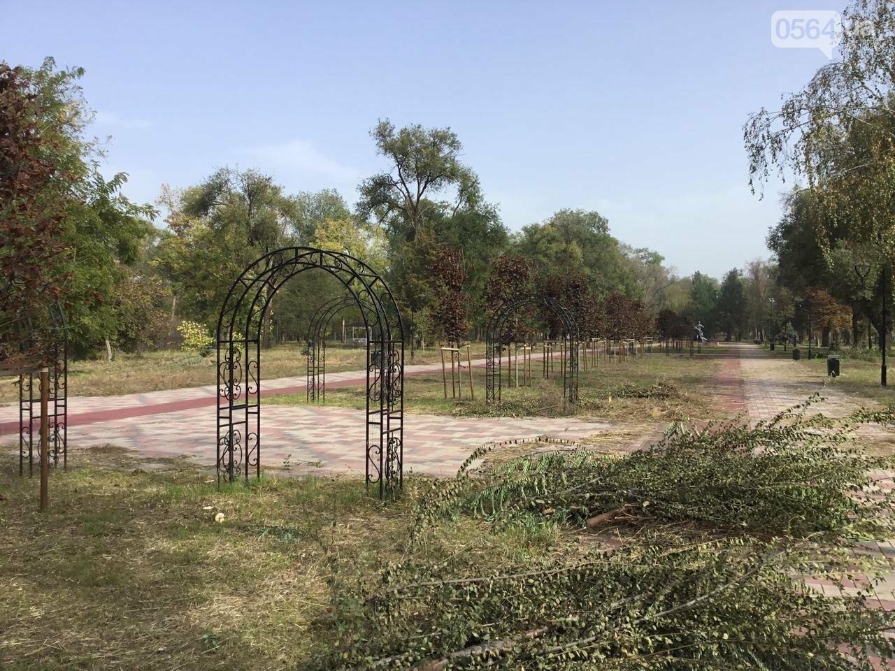 В Гданцевском парке наводят порядок. Как выглядит парк после покоса амброзии, - ФОТО, ВИДЕО, фото-21