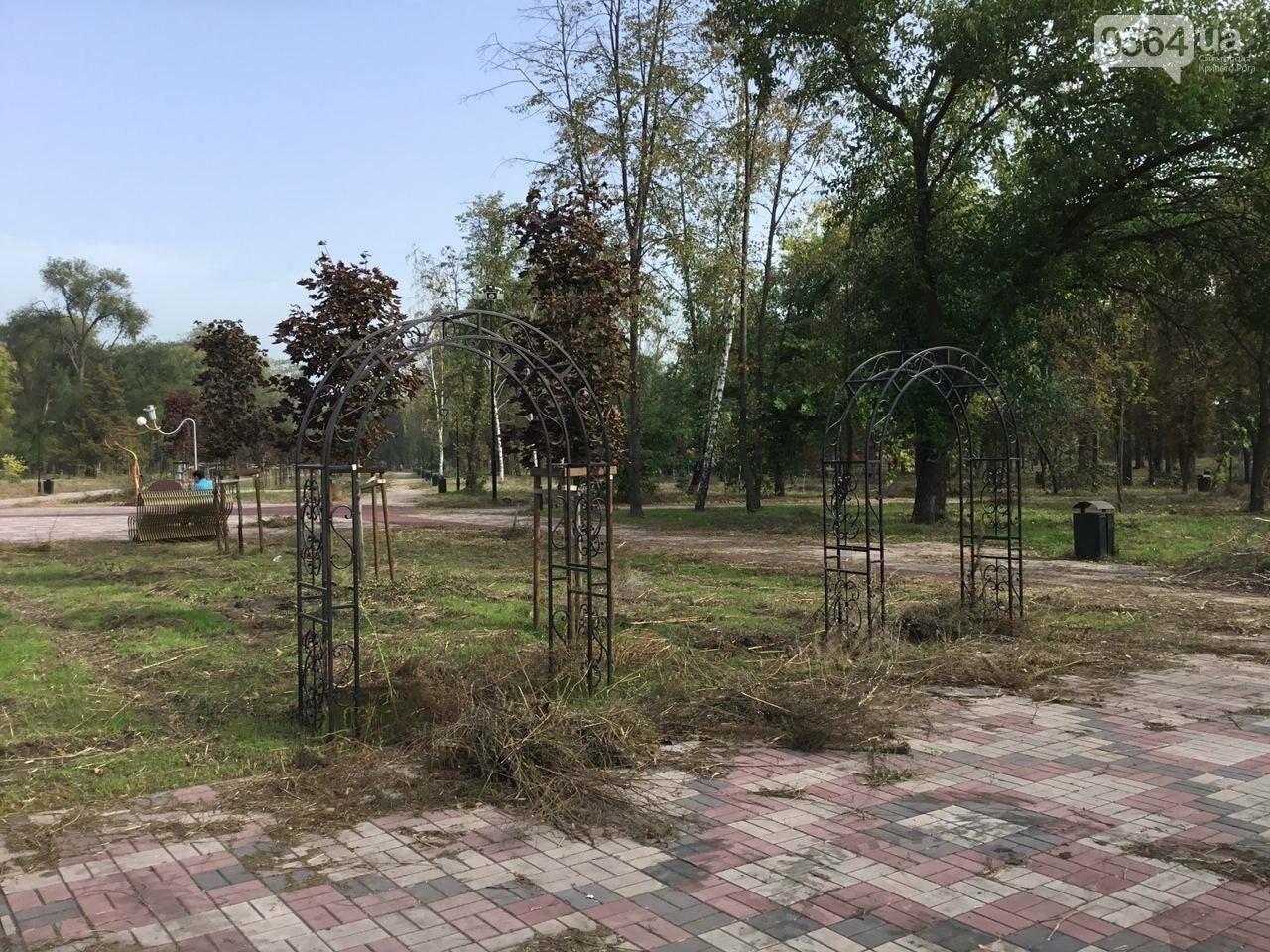 В Гданцевском парке наводят порядок. Как выглядит парк после покоса амброзии, - ФОТО, ВИДЕО, фото-28