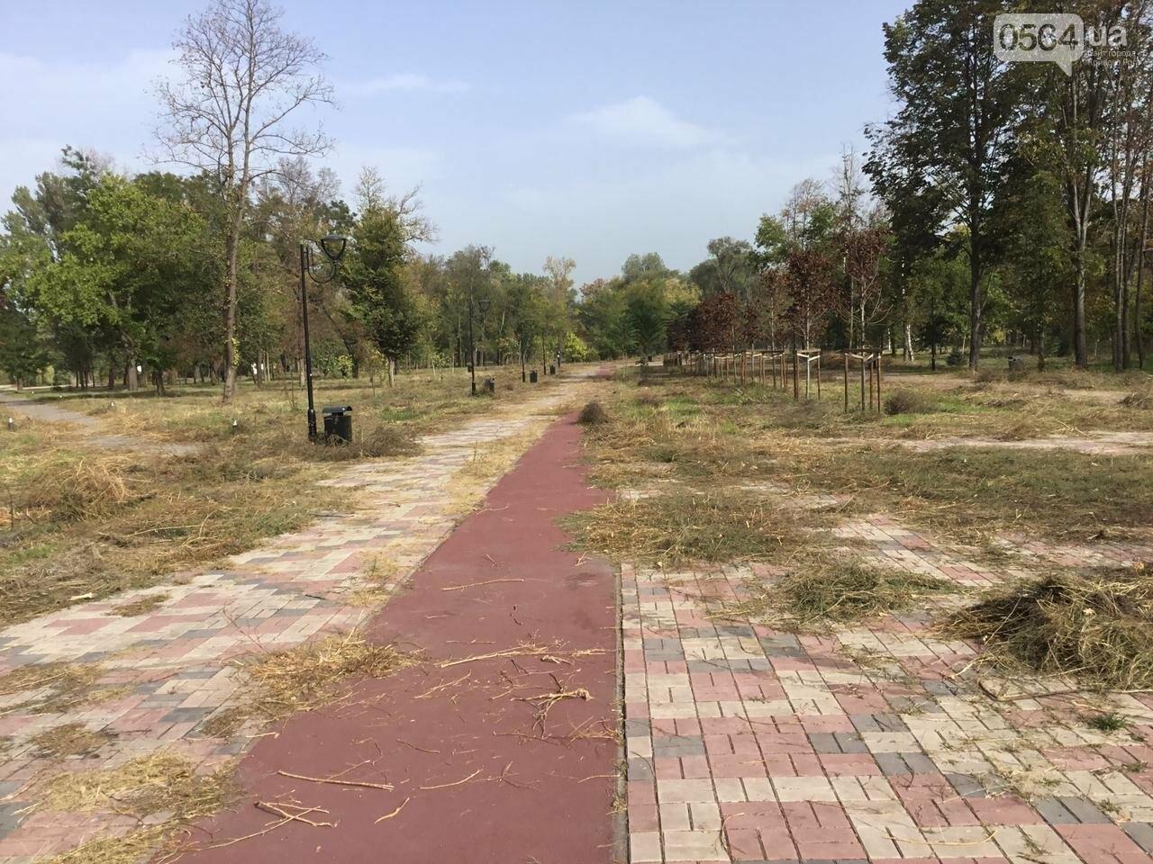 В Гданцевском парке наводят порядок. Как выглядит парк после покоса амброзии, - ФОТО, ВИДЕО, фото-30