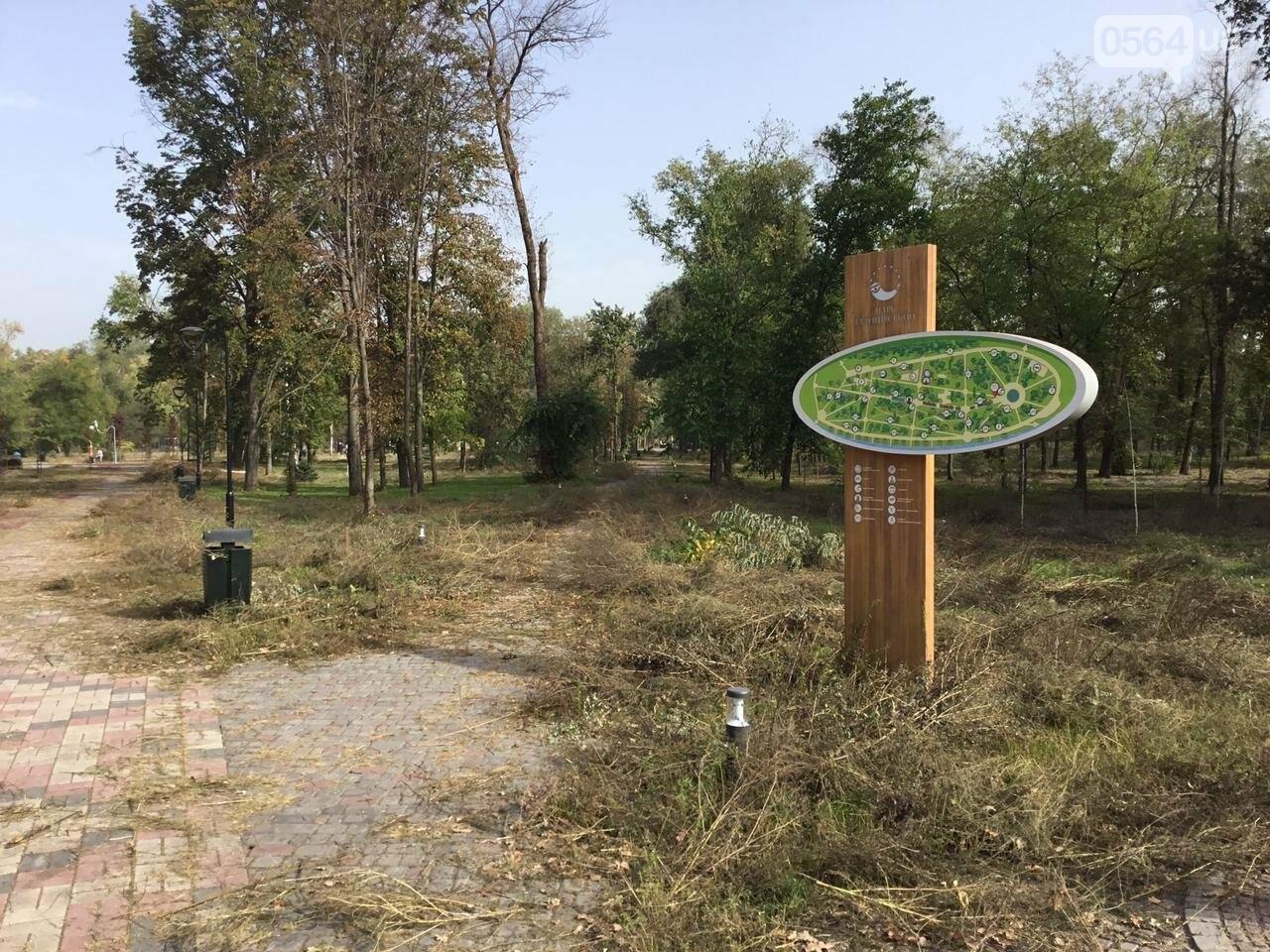В Гданцевском парке наводят порядок. Как выглядит парк после покоса амброзии, - ФОТО, ВИДЕО, фото-31