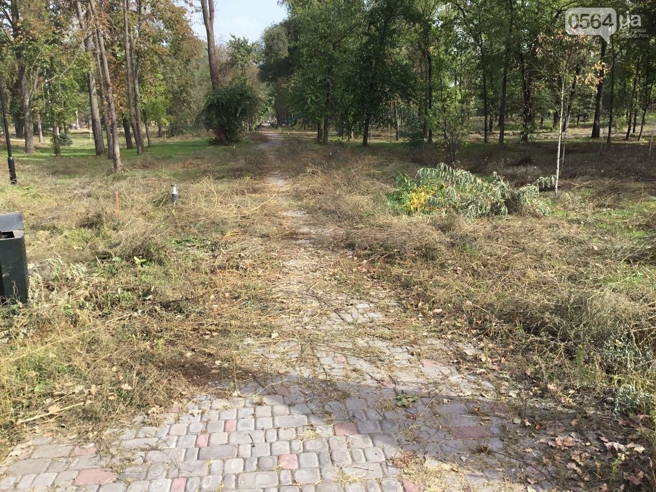 В Гданцевском парке наводят порядок. Как выглядит парк после покоса амброзии, - ФОТО, ВИДЕО, фото-32