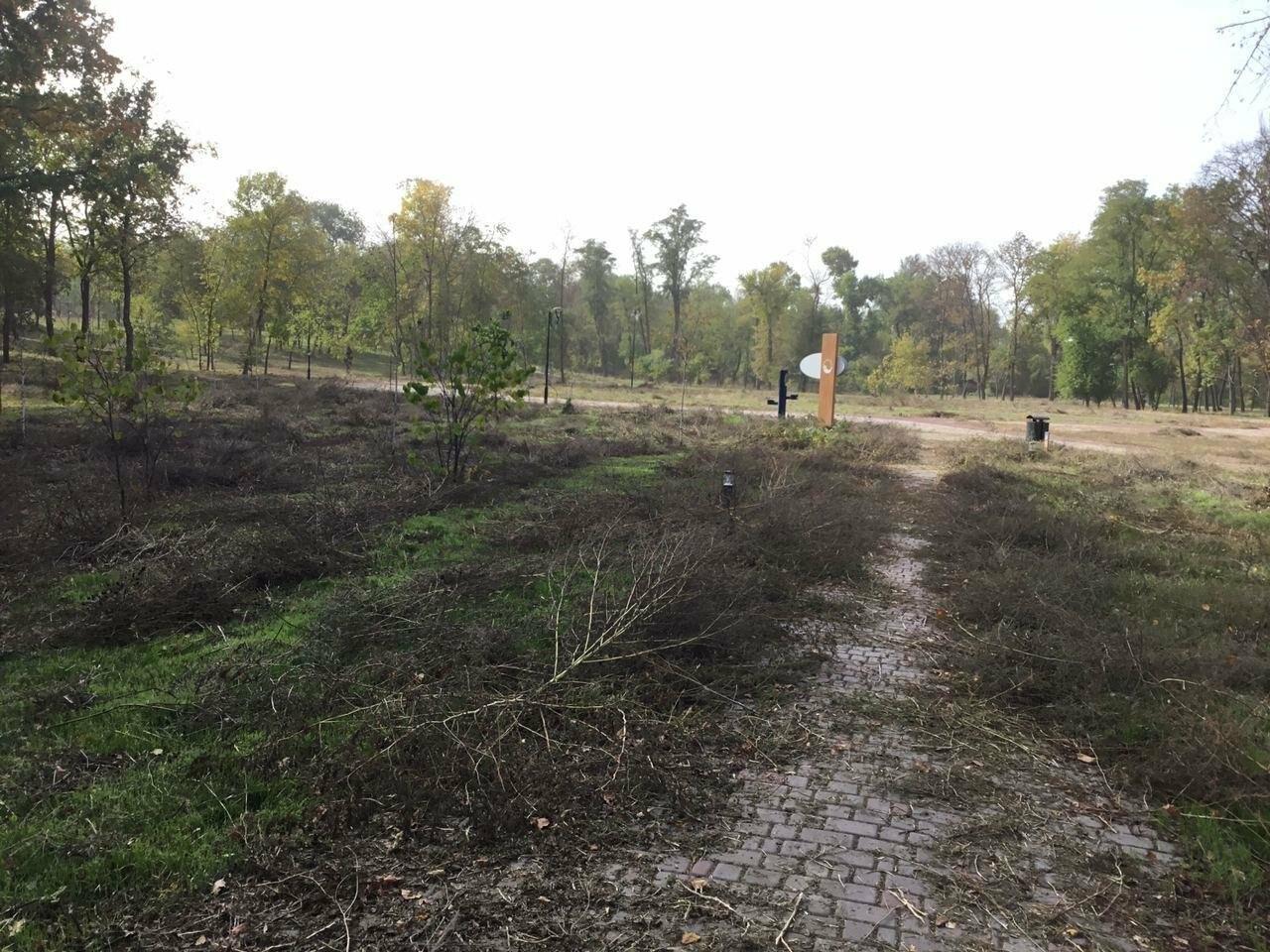 В Гданцевском парке наводят порядок. Как выглядит парк после покоса амброзии, - ФОТО, ВИДЕО, фото-34