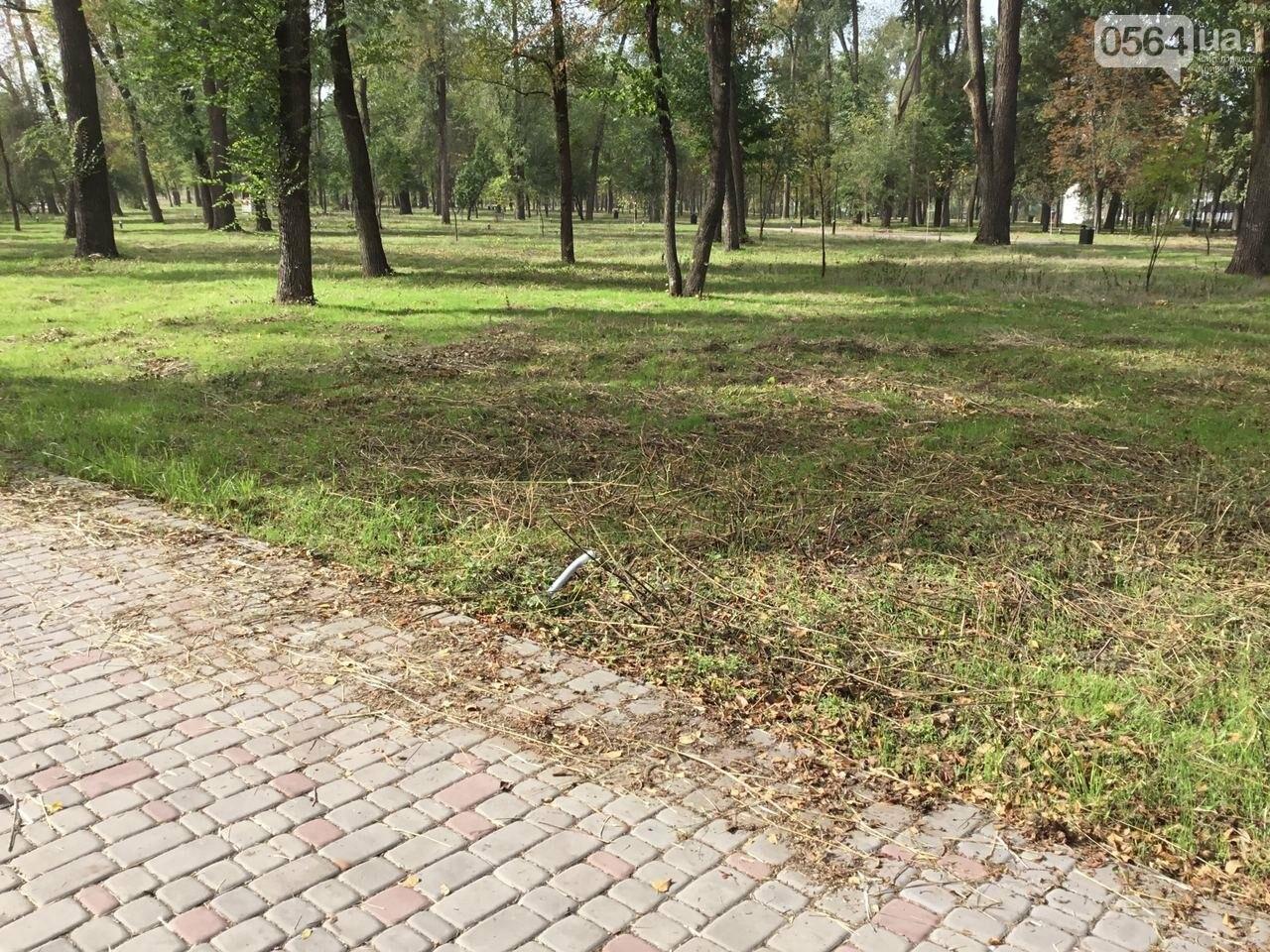 В Гданцевском парке наводят порядок. Как выглядит парк после покоса амброзии, - ФОТО, ВИДЕО, фото-37