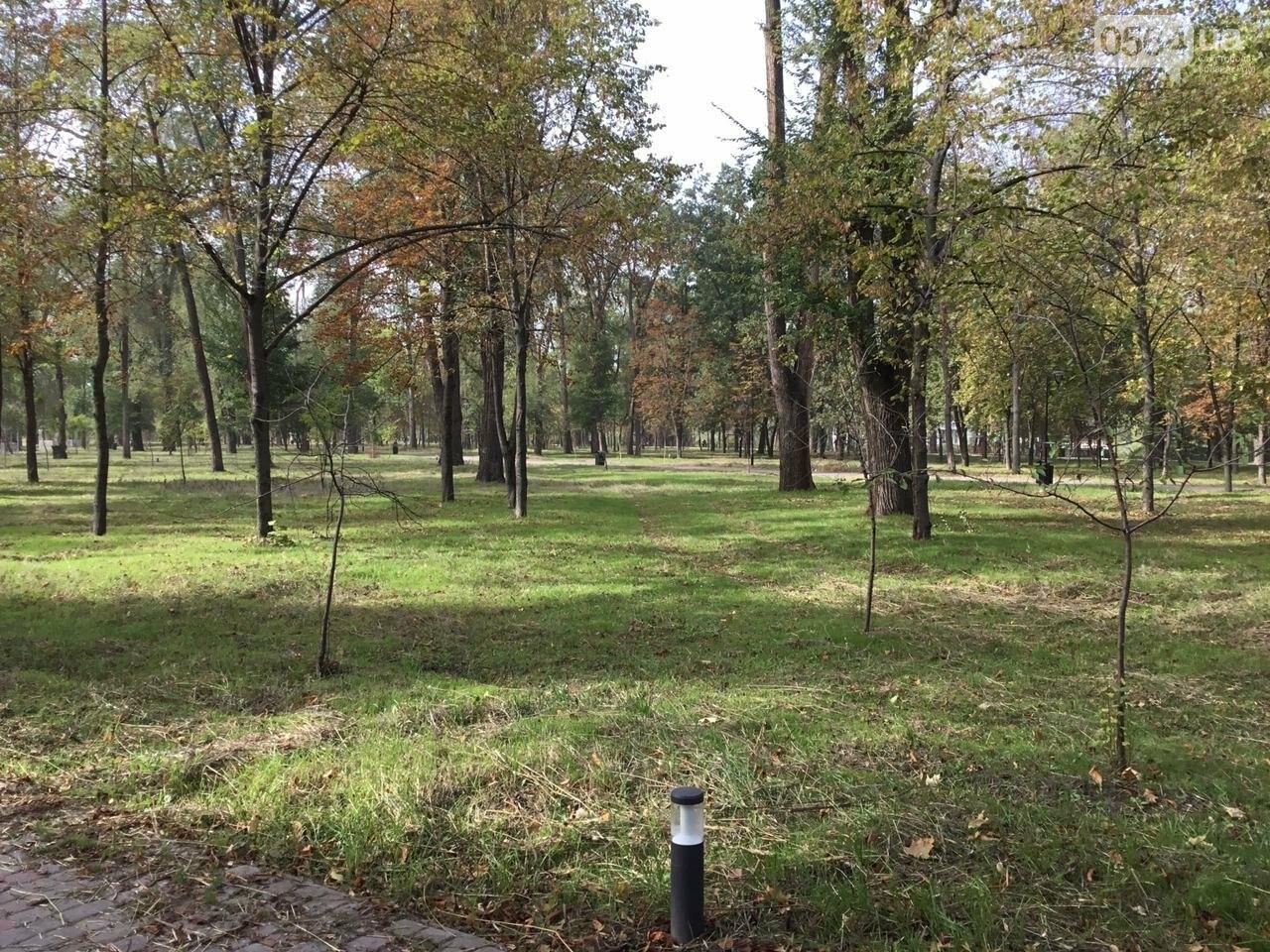 В Гданцевском парке наводят порядок. Как выглядит парк после покоса амброзии, - ФОТО, ВИДЕО, фото-38