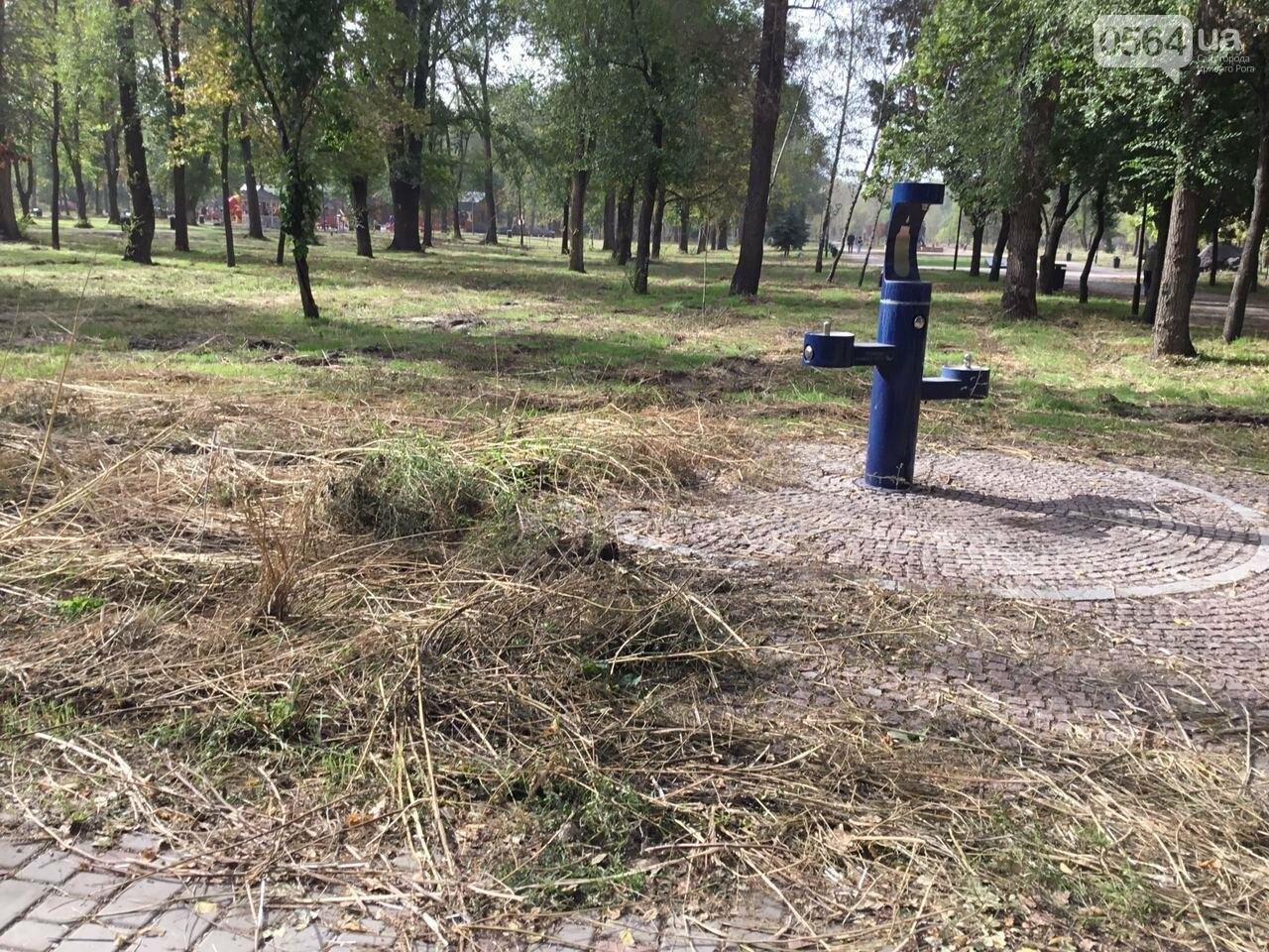 В Гданцевском парке наводят порядок. Как выглядит парк после покоса амброзии, - ФОТО, ВИДЕО, фото-41