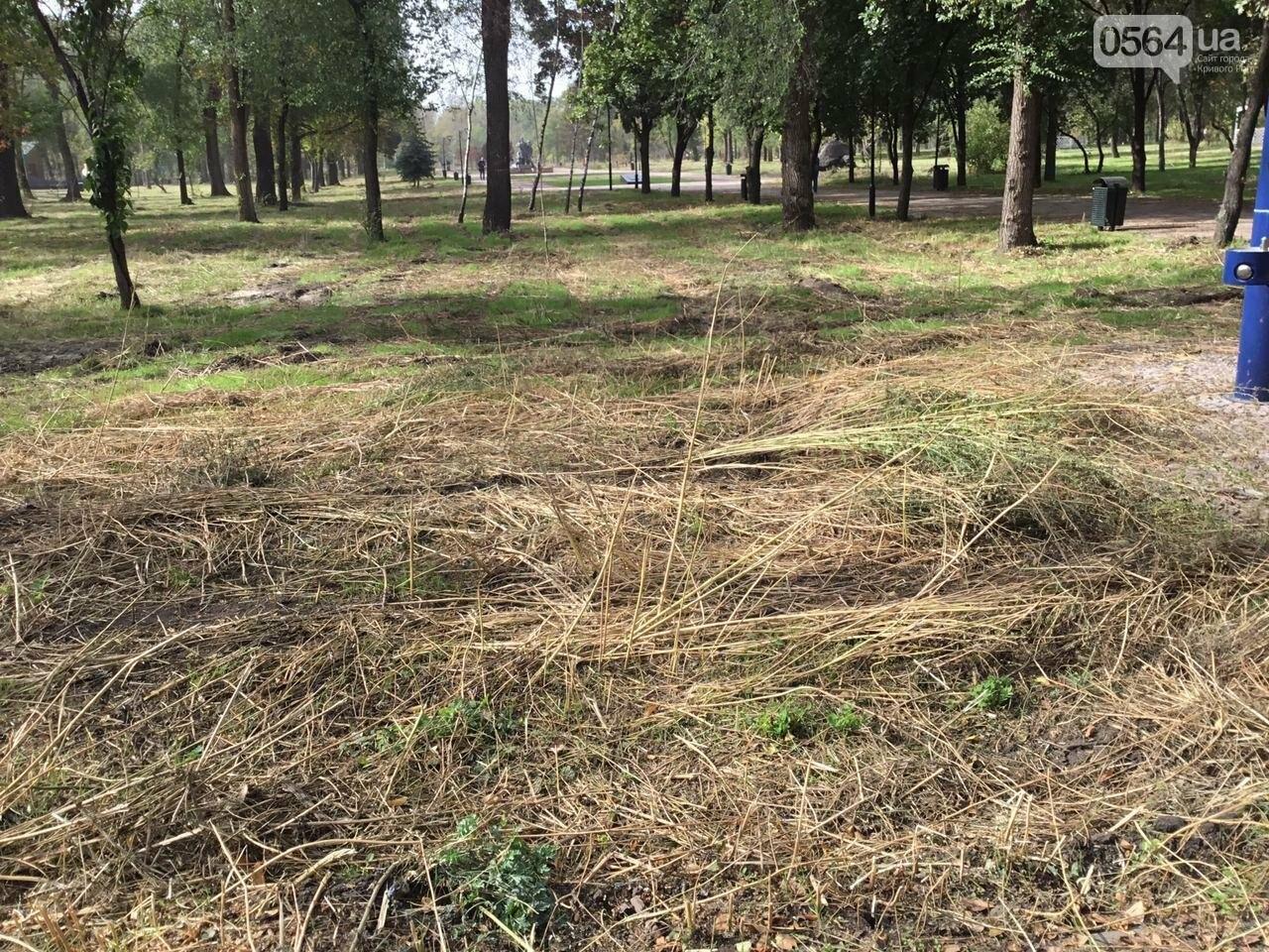 В Гданцевском парке наводят порядок. Как выглядит парк после покоса амброзии, - ФОТО, ВИДЕО, фото-42