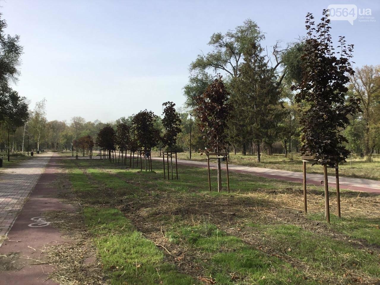 В Гданцевском парке наводят порядок. Как выглядит парк после покоса амброзии, - ФОТО, ВИДЕО, фото-47