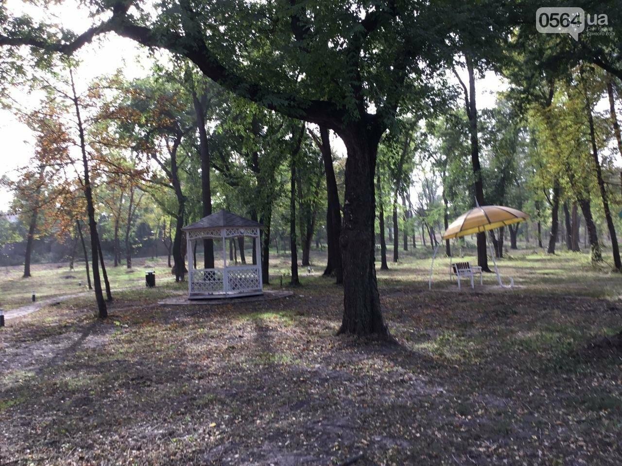 В Гданцевском парке наводят порядок. Как выглядит парк после покоса амброзии, - ФОТО, ВИДЕО, фото-66