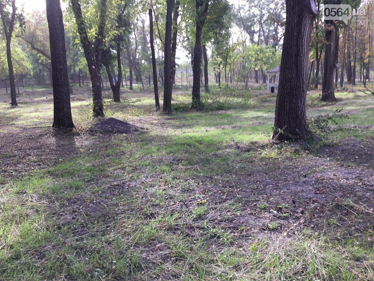 В Гданцевском парке наводят порядок. Как выглядит парк после покоса амброзии, - ФОТО, ВИДЕО, фото-67