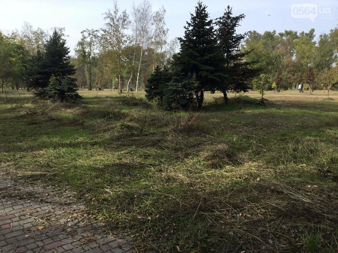 В Гданцевском парке наводят порядок. Как выглядит парк после покоса амброзии, - ФОТО, ВИДЕО, фото-68