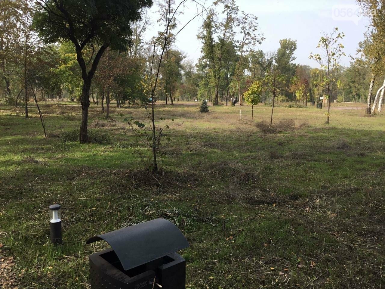 В Гданцевском парке наводят порядок. Как выглядит парк после покоса амброзии, - ФОТО, ВИДЕО, фото-69