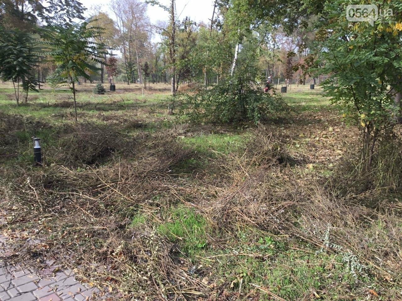 В Гданцевском парке наводят порядок. Как выглядит парк после покоса амброзии, - ФОТО, ВИДЕО, фото-71