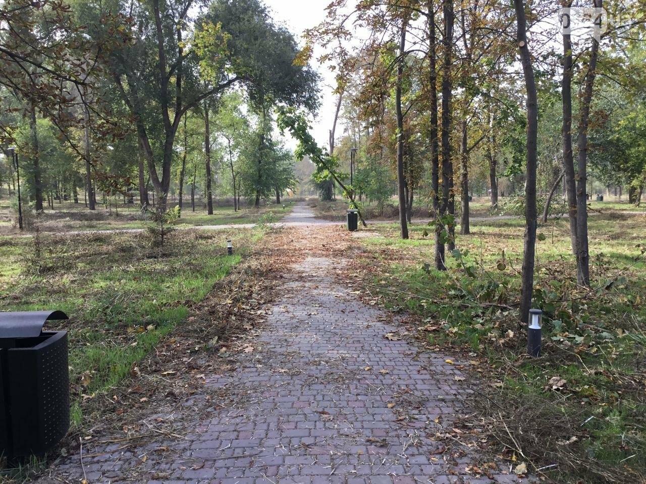 В Гданцевском парке наводят порядок. Как выглядит парк после покоса амброзии, - ФОТО, ВИДЕО, фото-72