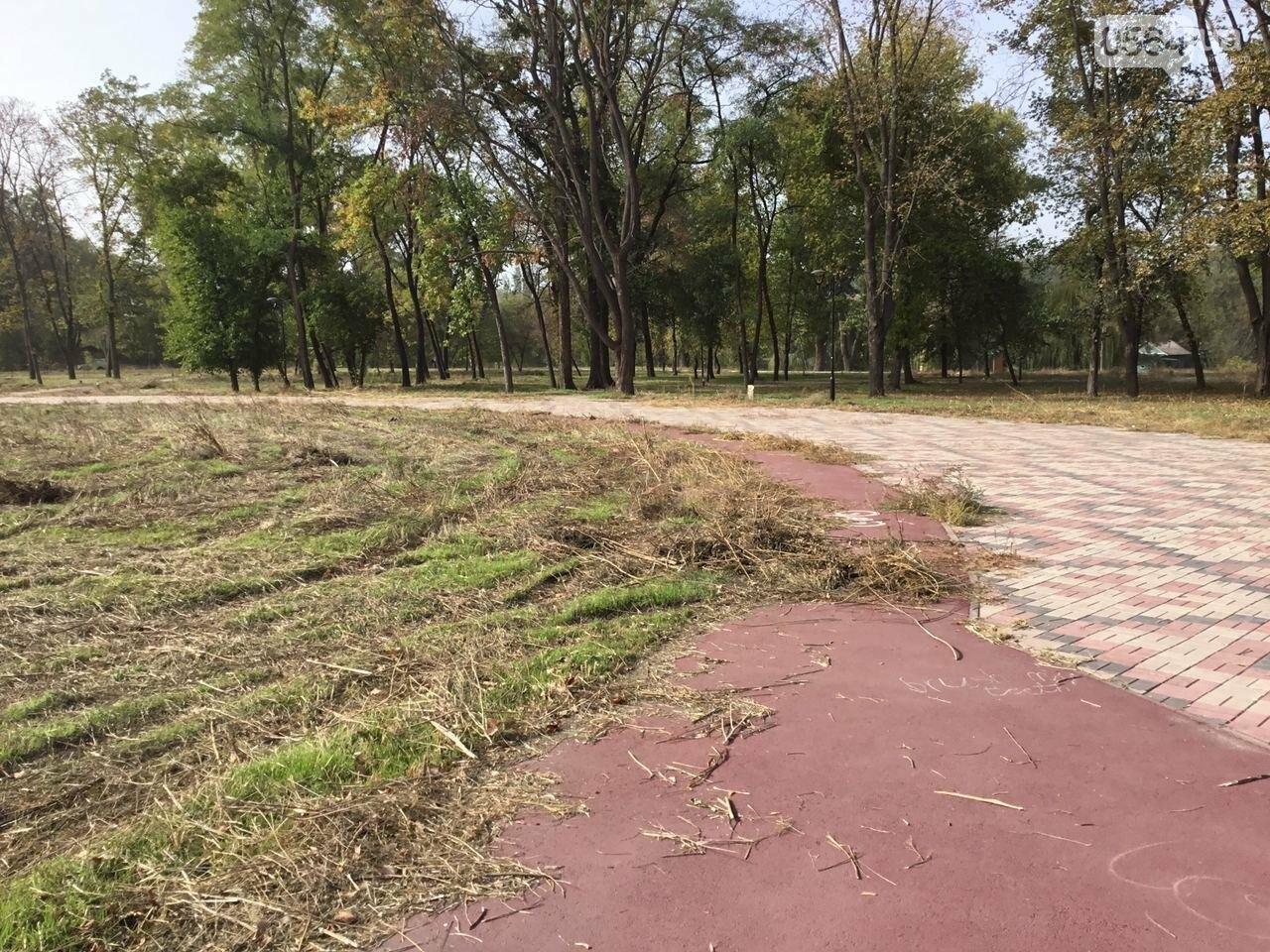 В Гданцевском парке наводят порядок. Как выглядит парк после покоса амброзии, - ФОТО, ВИДЕО, фото-73