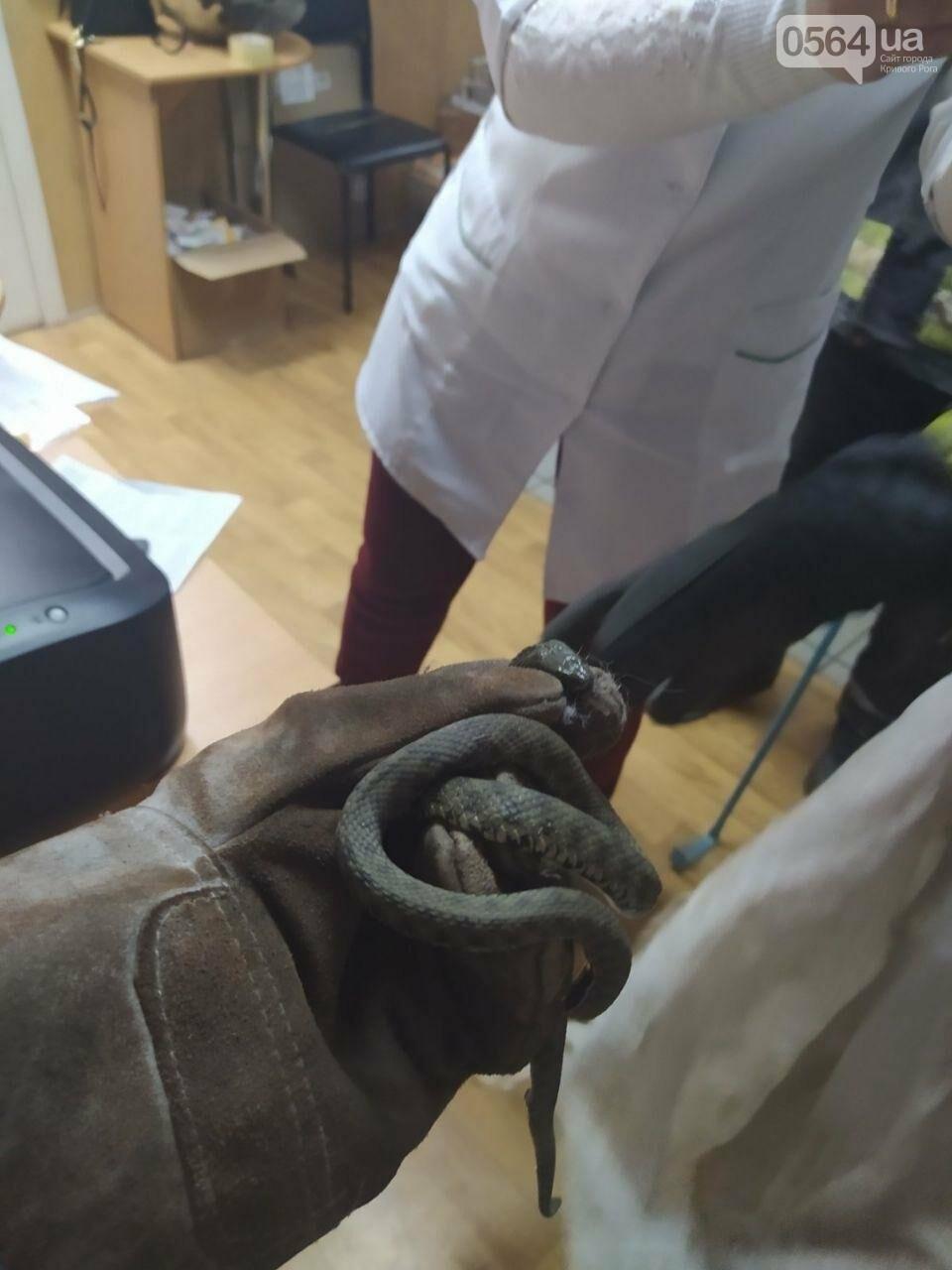В аптеке Кривого Рога обнаружили змею, - ФОТО, фото-1