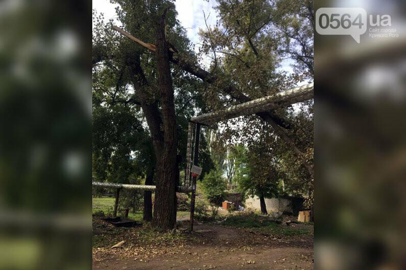 В Кривом Роге огромная ветка рухнула на теплотрассу и перекрыла дорогу, - ФОТО , фото-1