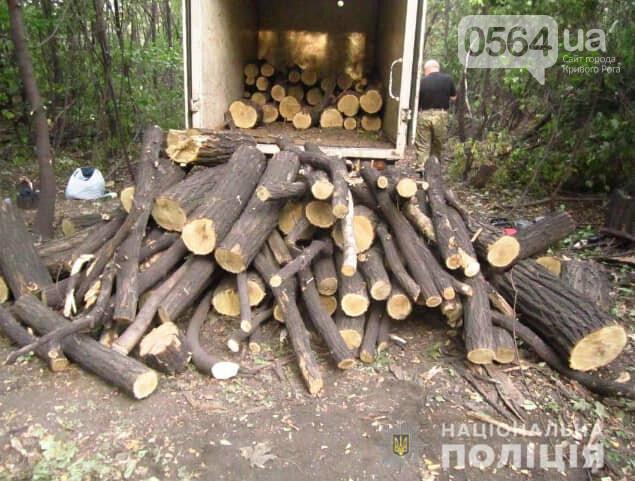 """Для вырубки деревьев в Кривом Роге использовали справку """"сомнительного характера"""", фото-3"""