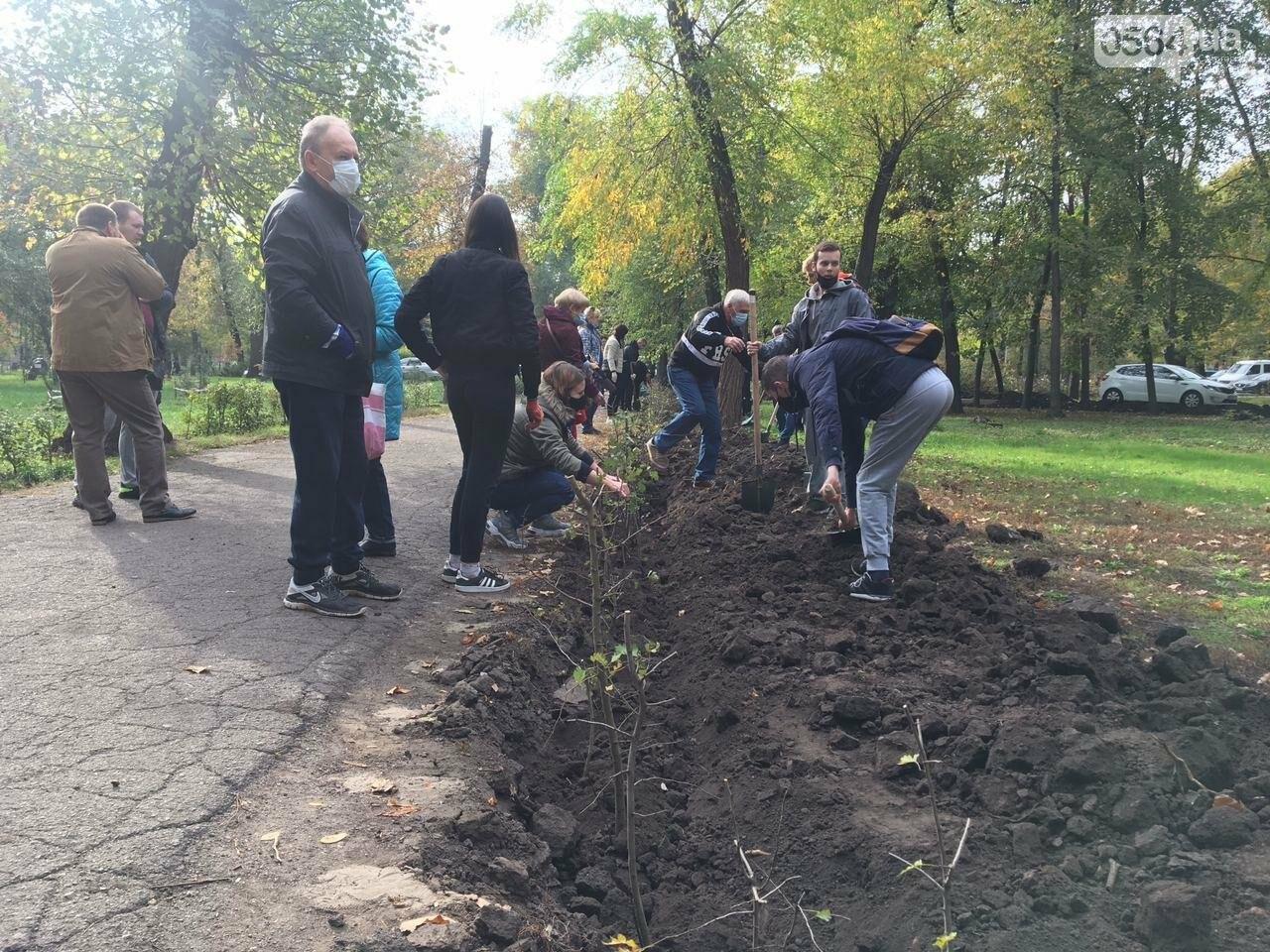 Как выглядит парк, который благоустраивают криворожане, - ФОТО, ВИДЕО, фото-28