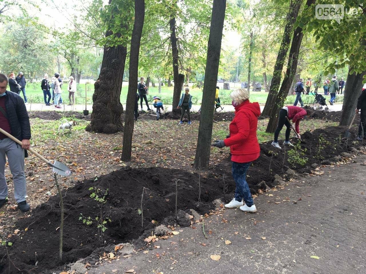 Как выглядит парк, который благоустраивают криворожане, - ФОТО, ВИДЕО, фото-34