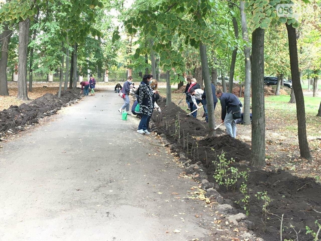 Как выглядит парк, который благоустраивают криворожане, - ФОТО, ВИДЕО, фото-36
