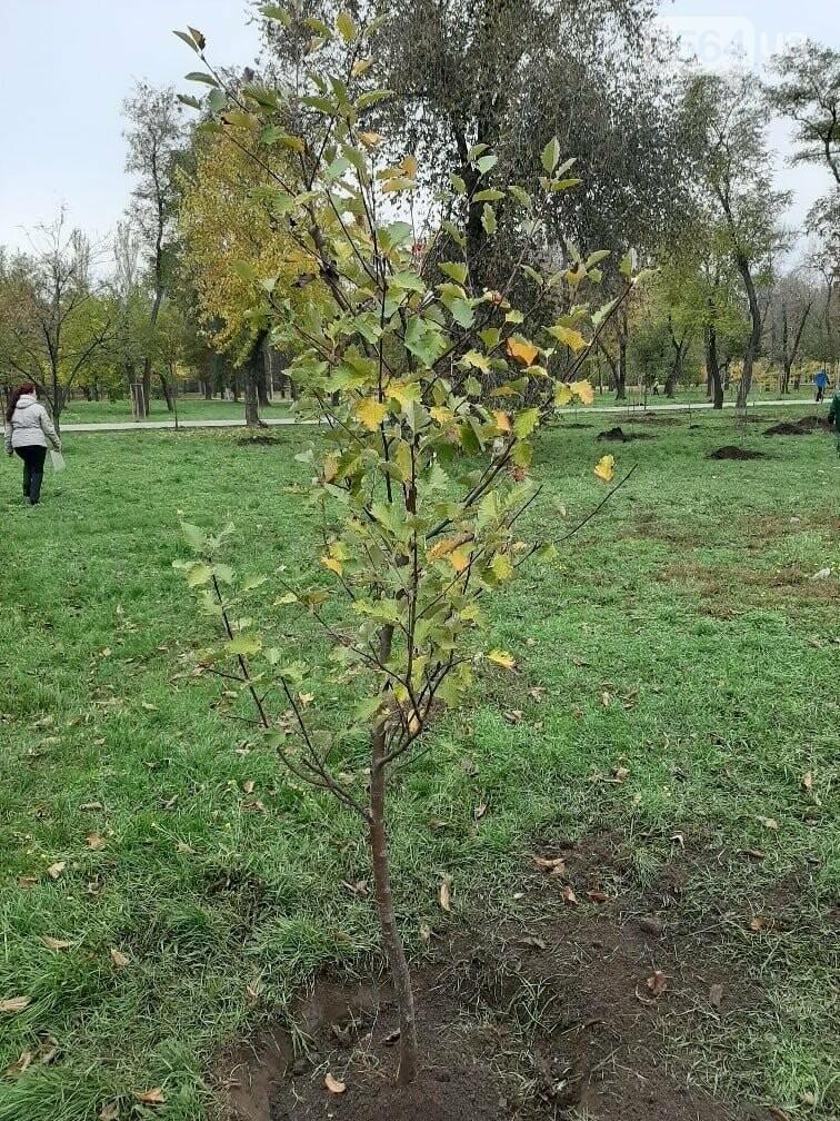 Криворожские экологи призвали промышленные предприятия высадить обещанные деревья на промплощадках, - ФОТО, фото-2