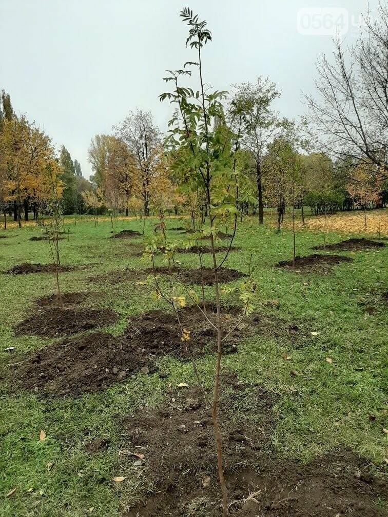 Криворожские экологи призвали промышленные предприятия высадить обещанные деревья на промплощадках, - ФОТО, фото-1