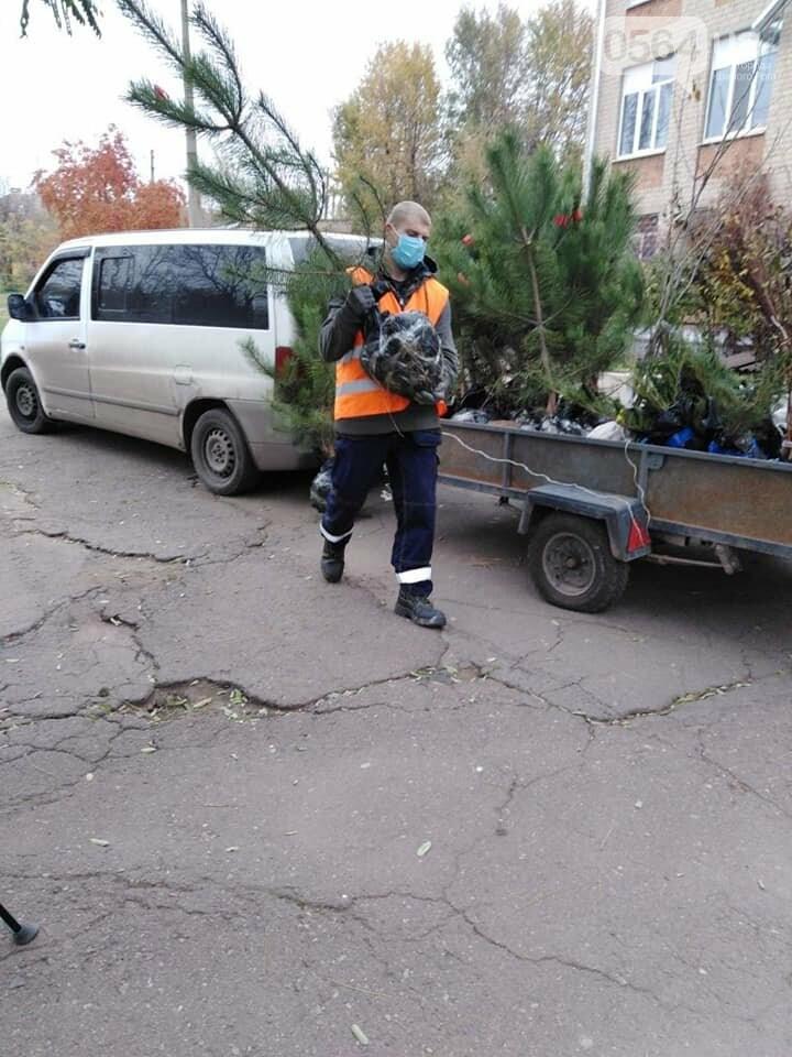 В Кривом Роге до конца года планируют высадить более 5 тысяч зеленых насаждений, - ФОТО , фото-4