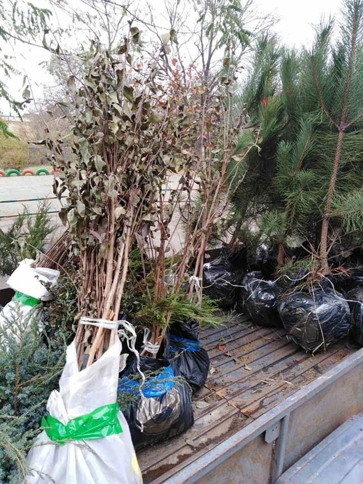 В Кривом Роге до конца года планируют высадить более 5 тысяч зеленых насаждений, - ФОТО , фото-5