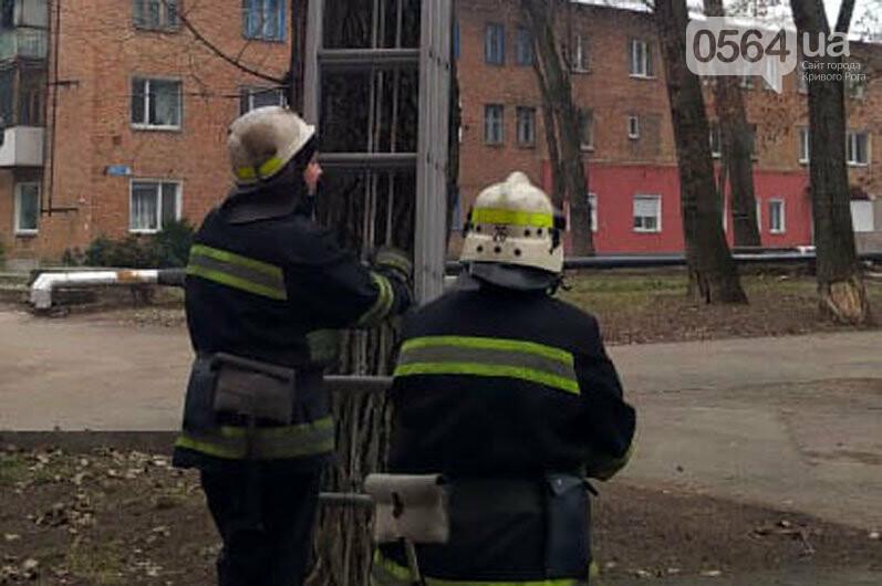 В Кривом Роге спасли домашнего любимца, который несколько суток просидел на дереве, - ФОТО , фото-1