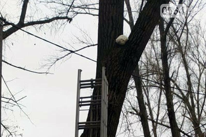 В Кривом Роге спасли домашнего любимца, который несколько суток просидел на дереве, - ФОТО , фото-2